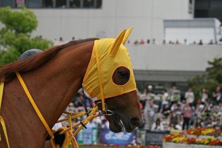 馬の目 7