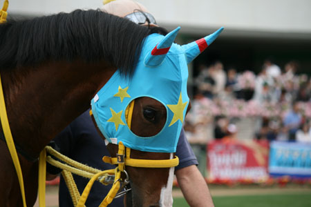 馬の目 8