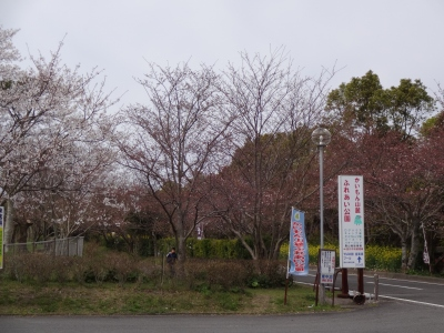 開聞 (9)