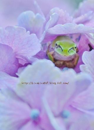 http://kirakira947.blog.fc2.com/