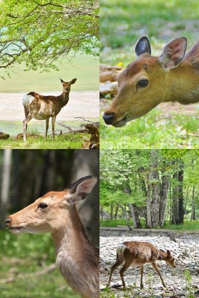 奥日光で出逢った動物たち