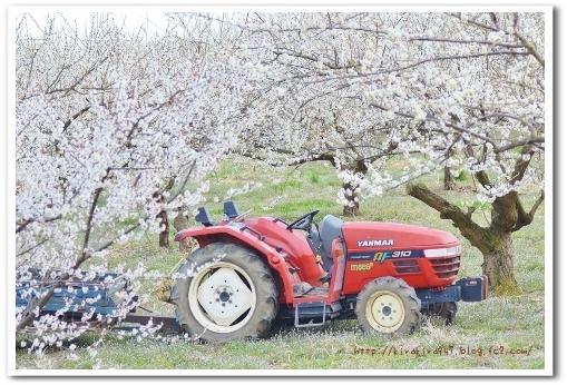 国営塩那台地の梅の里