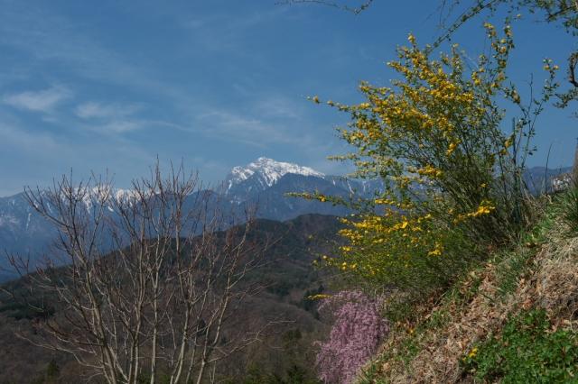 甲斐駒ヶ岳-ヤマブキ