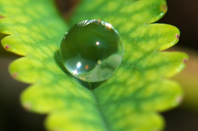 水滴画像-1