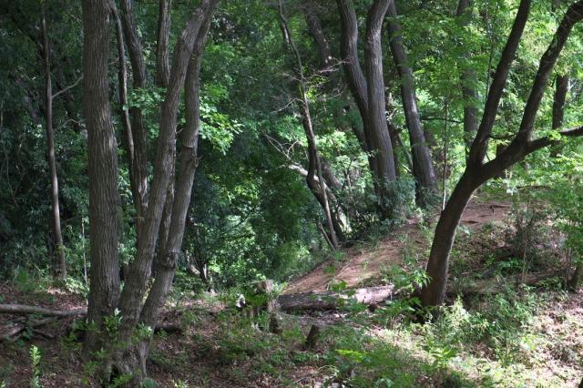 明るい雑木林