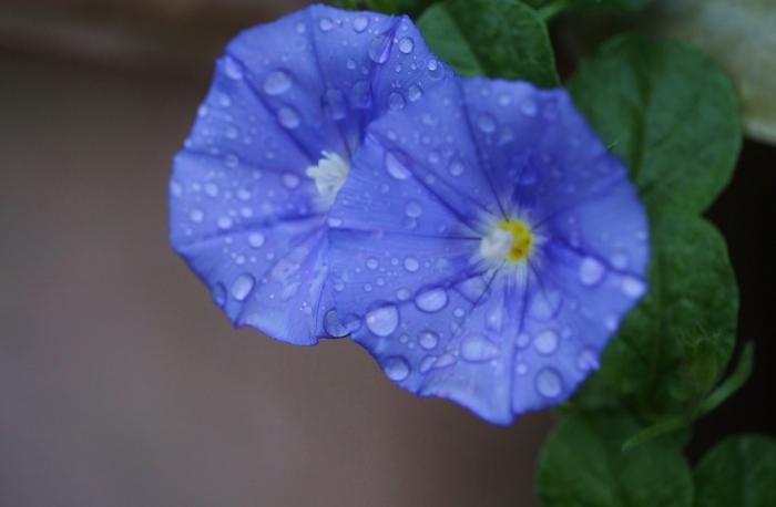 庭に咲く花 2