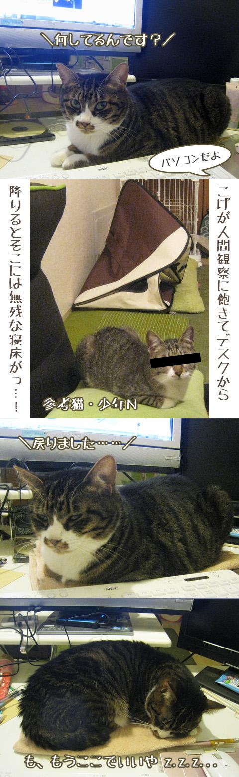 猫写真4コマ