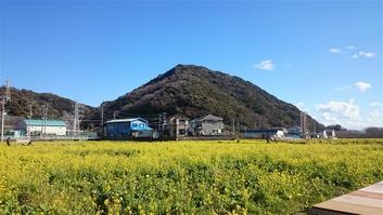IMG_nanohana2_16.jpg