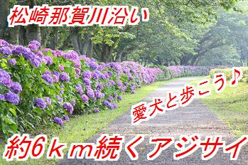 ajisai_201504140348155b2.jpg