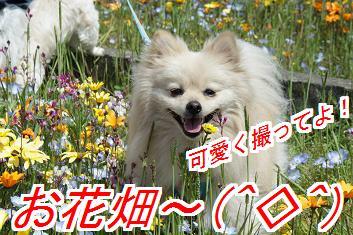 hanabani_2015041403481601b.jpg