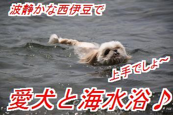 umisii_20150414034823bad.jpg