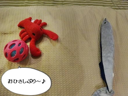 komaro20150527.jpg