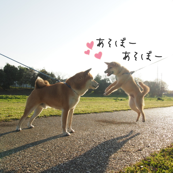 20150417-004.png