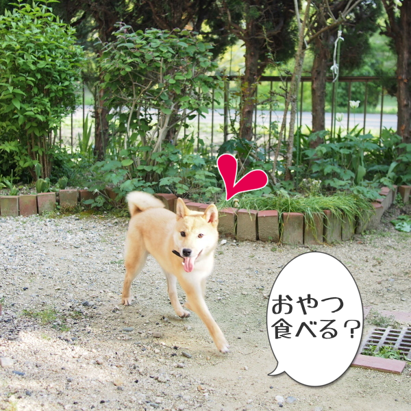 20150430-006.png