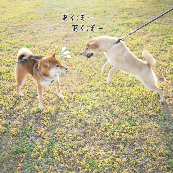 20150513-0001.png