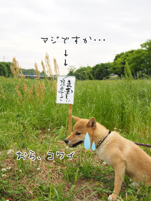 20150519-001.png