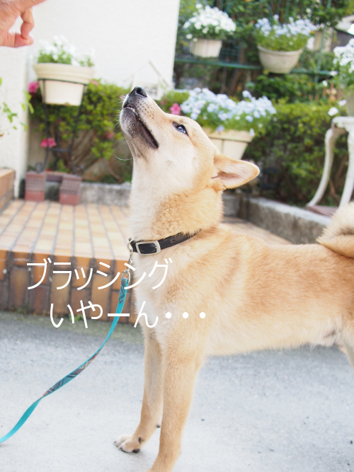 20150528-002.png
