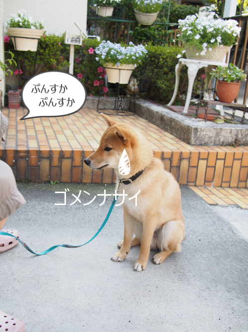 20150528-004.png