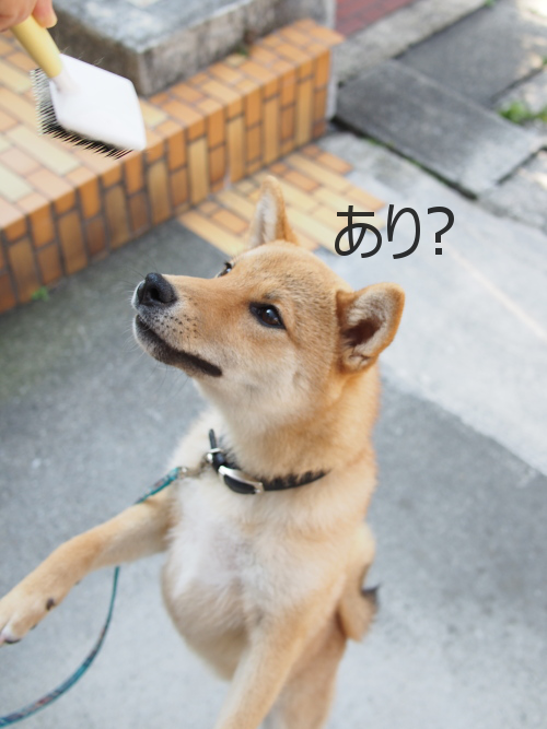 20150528-009.png