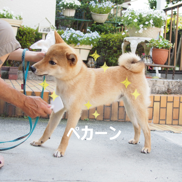 20150528-010.png