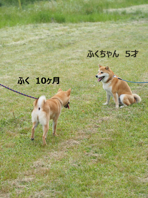 20150611-001.png