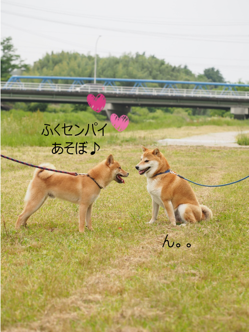 20150611-002.png