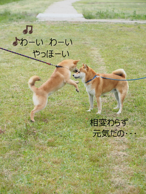 20150611-003.png