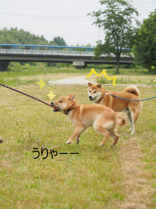 20150611-005.png