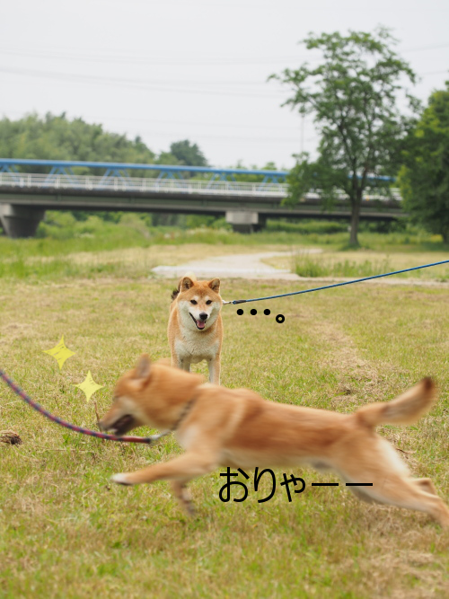 20150611-006.png