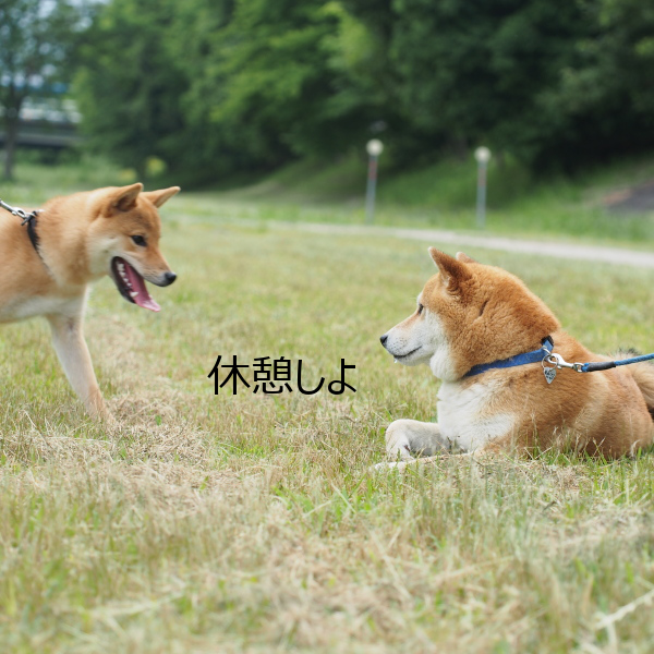 20150611-008.png