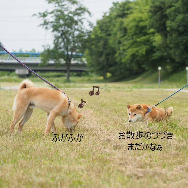 20150611-010.png
