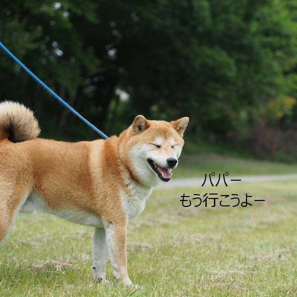 20150611-011.png