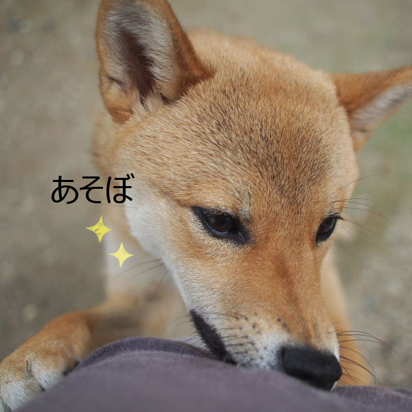 20150617-002.png
