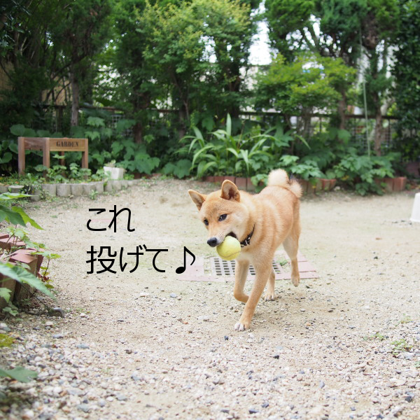 20150617-003.png