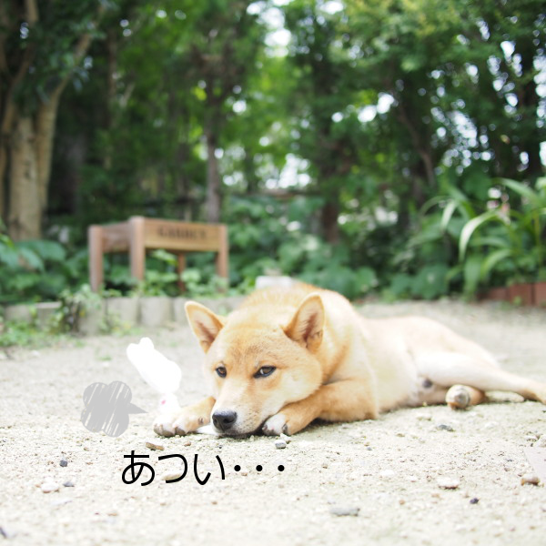 20150617-005.png