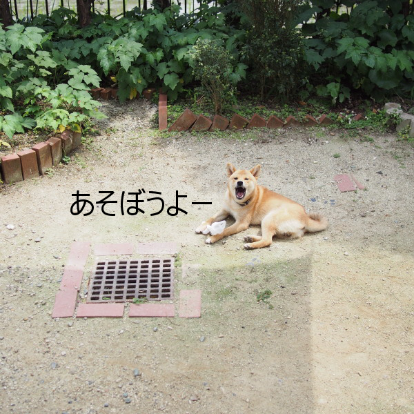 20150617-008.png