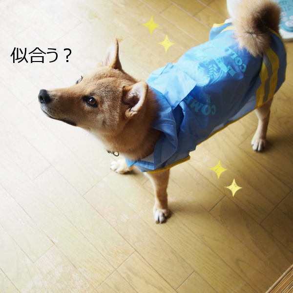20150622-005.png