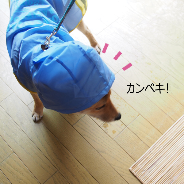 20150622-008.png