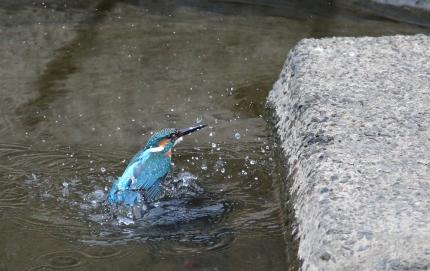 0129_水浴び 6