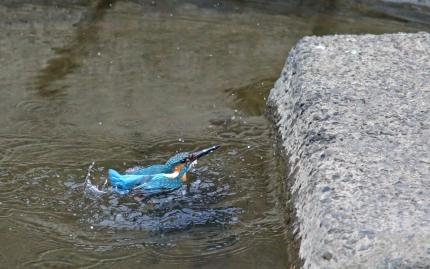 0129_水浴び 7