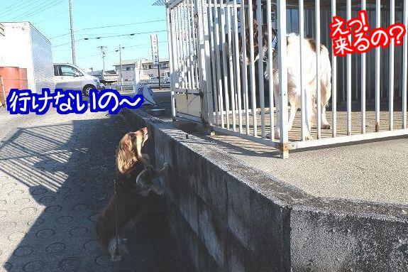 20141227210611ace.jpg