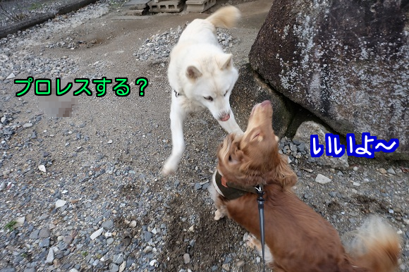 20150129125018ce3.png