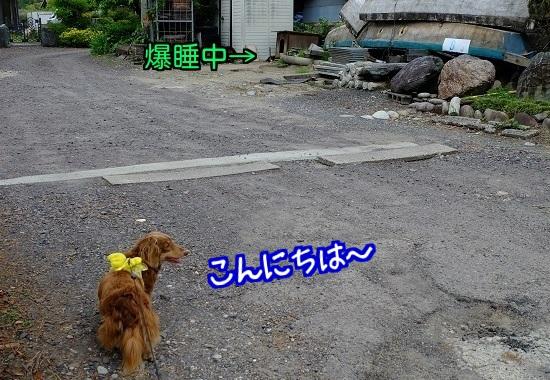 201505291207224c1.jpg
