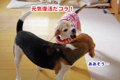 いぬんぽ 6