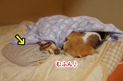 いぬんぽ 5