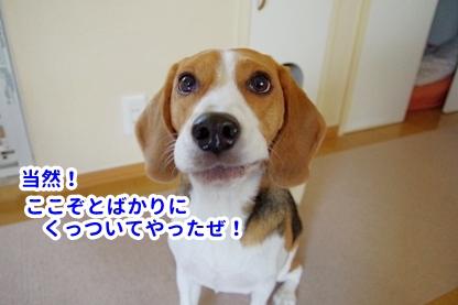 いぬんぽ 1