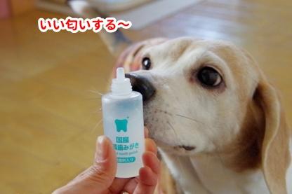 歯磨き 3
