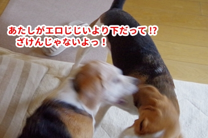 モモちゃん 4