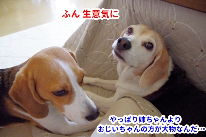 モモちゃん 3