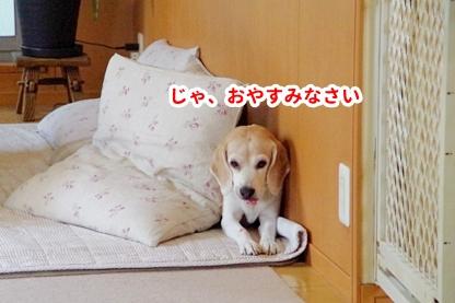 おやすみ 6